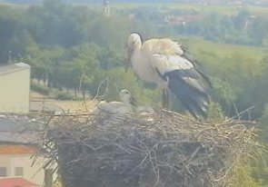 Web camera Germany, Gunzenhausen, Stork