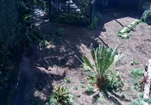 Web camera United States of America, California, San Diego, Zoo enclosure with the tiger