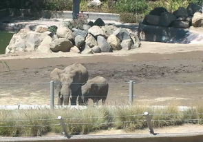 Web camera United States of America, California, San Diego, Zoo enclosure with the elefant