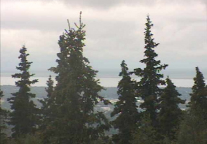 Web camera United States of America, Alaska, Mount Susitna, Forest