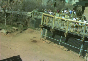 Web cameras United States of America, Colorado, Colorado Springs, Zoo aviary