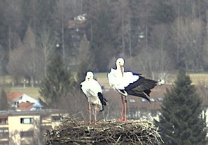 Web camera Germany, Isny, Nest
