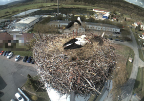 Web camera Germany, Thüringen, Meiningen, Nest